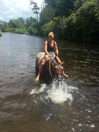 Coromandel Peninsula, Nova Zelândia: Having fun! Our horses love a good play.