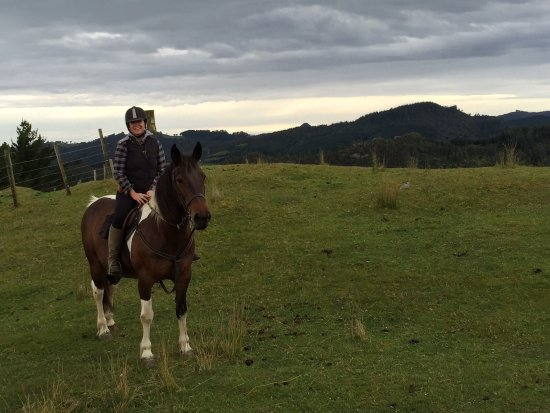 Coromandel Peninsula, Nueva Zelanda: Having fun! Our horses love a good play.