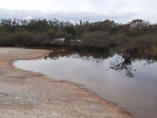 Manly, Australia: Hanging swamp.
