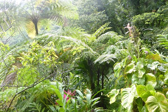 Papillote Tropical Gardens: Beautiful foliage