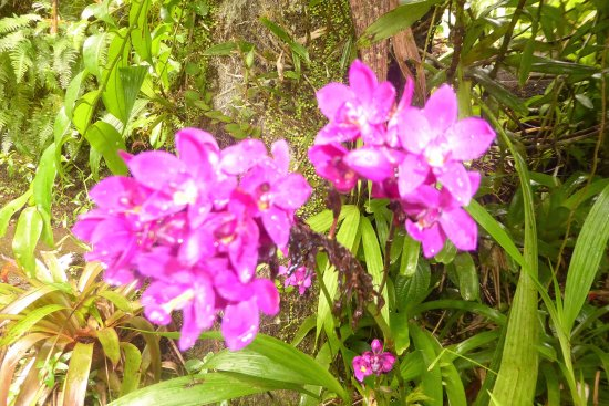 Papillote Tropical Gardens: Not sure but could be wild orchids?