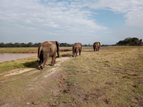 The Crags, Sudáfrica: Walk with elephants
