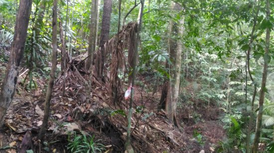 Kota Damansara Community Forest Reserve