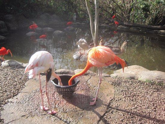Plettenberg Bay, Sudafrica: Flamingos at Birds of Eden