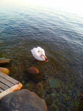 Rezekne, Latvia: lake shore