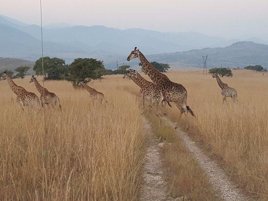 Badplaas, Sudáfrica: On the move