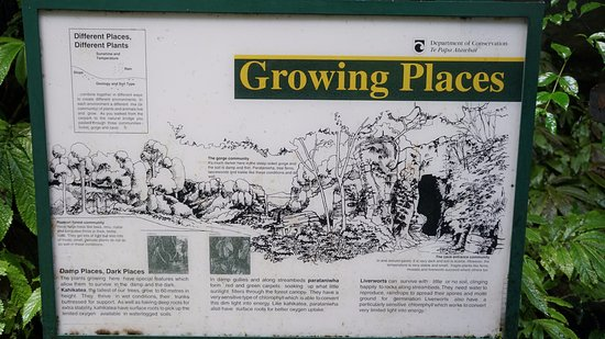Auckland Region, New Zealand: Informative sign in the Ruakuri Bushwalk