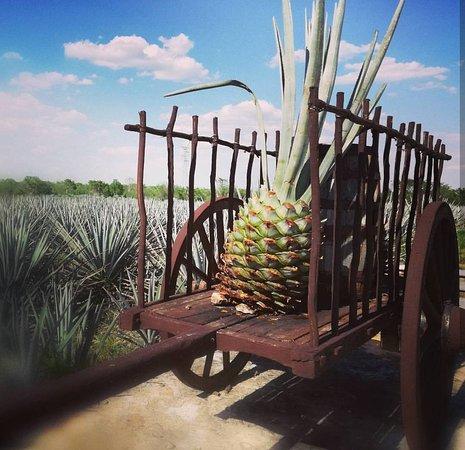 Viajero-Mexico.com
