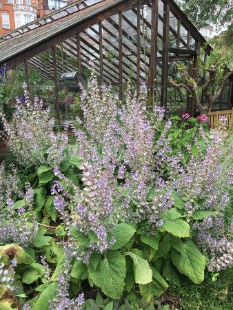 Chelsea Physic Garden