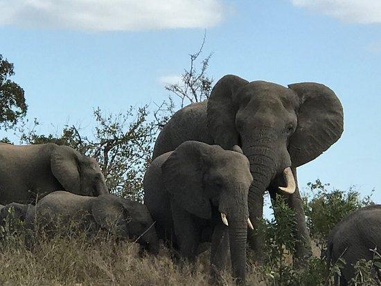 Hazyview, Afrika Selatan: photo3.jpg