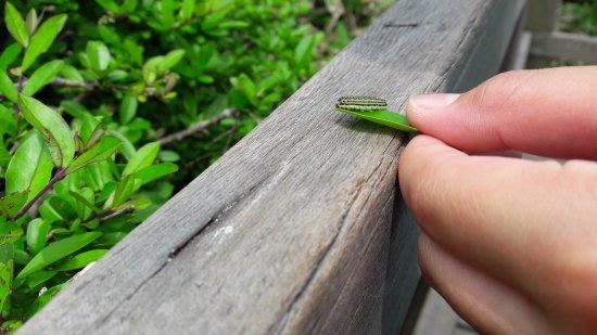 Hallasan National Park: Mr. bug