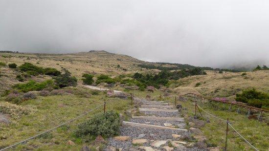 Hallasan National Park: trail3