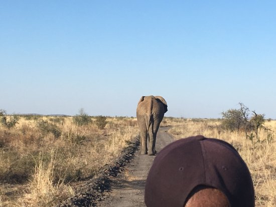 Madikwe Game Reserve, South Africa: photo1.jpg