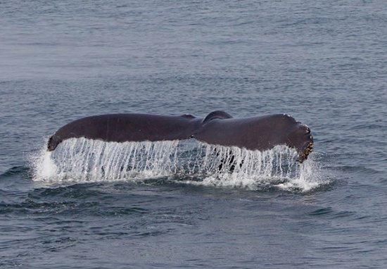 Dolphin Fleet Whale Watch: A small child onboard was convinced this was a mermaid!