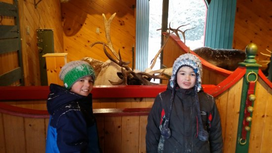 Santa's Village: Meeting reindeer