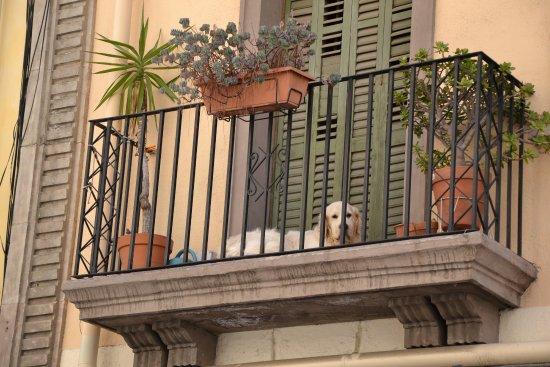 Balkon Izobrazhenie El Born Barselona Tripadvisor