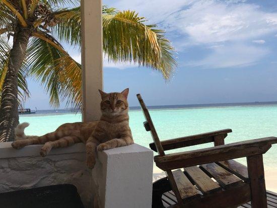 Bathala Island: unser gern gesehener Besucher - 'Ginger', das Inselkaterchen