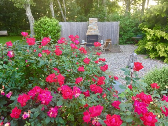 The Rose Garden And Fire Pit At The Platinum Pebble Boutique Inn