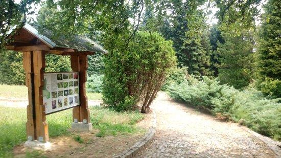 Arboretum Lisičine