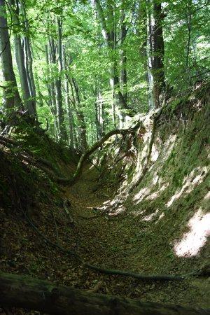 Suchedniowsko-Oblegorski Landscape Park