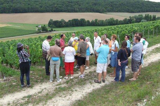Chaumont-le-Bois, France: Visite de la Vigne au Vin. Visite des vignes, de la cave et dégustation sur RDV