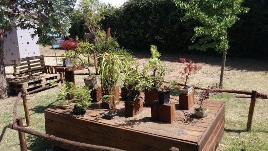 Trouillas, France: jardin de bonsaïs