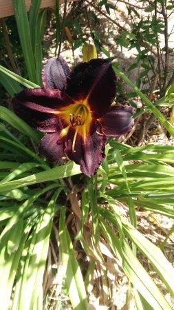 Trouillas, France: Des fleurs magnifiques partout
