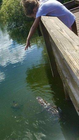 Al Lopez Park : Fishing peir