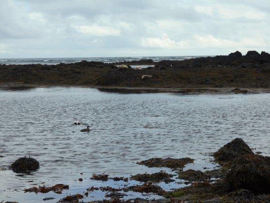 Hafnarfjordur, IJsland: Common3