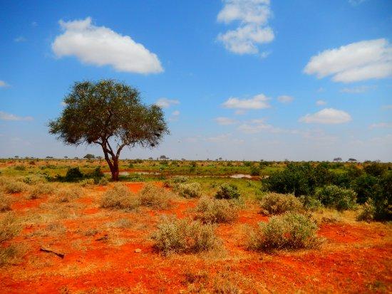 Neslo Tours and Safaris: Tsavo East