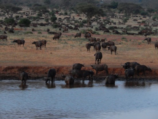 Neslo Tours and Travels Day Tours: at the Vio Wildlife Lodge