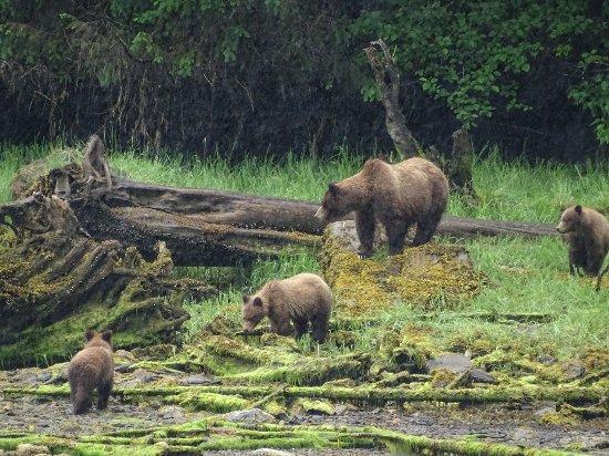 Принс-Руперт, Канада: Mother & cubs