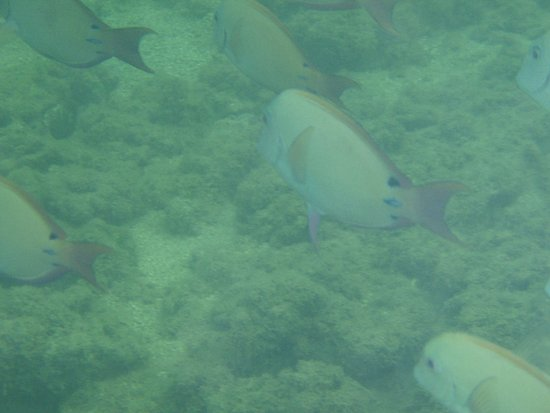 Kahuku, Havai: Schools of fish in the area