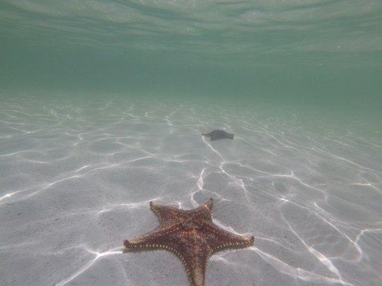 Tours Cayman: photo0.jpg