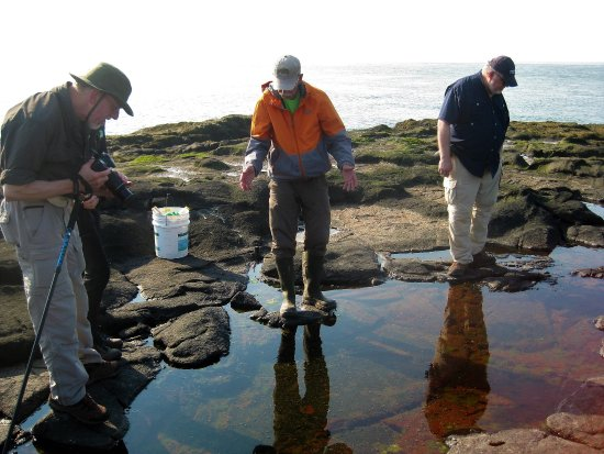 Smith's Cove, Canadá: Searching the tidal pools.