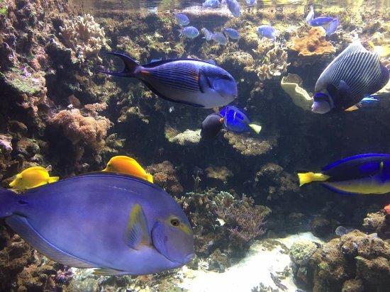 Atlanterhavsparken: Peixes na parte interna do aquário