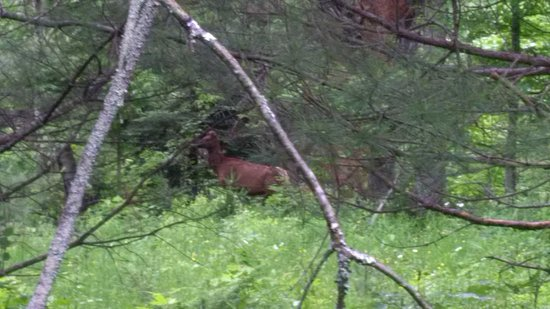 Bancroft, Canada: Wild elk spotted nearby