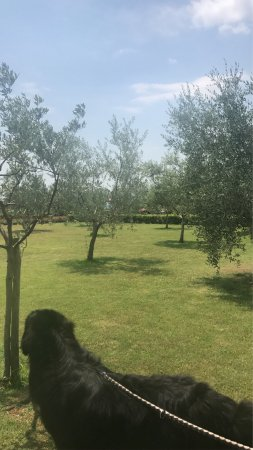 Agriturismo Savernano: photo4.jpg