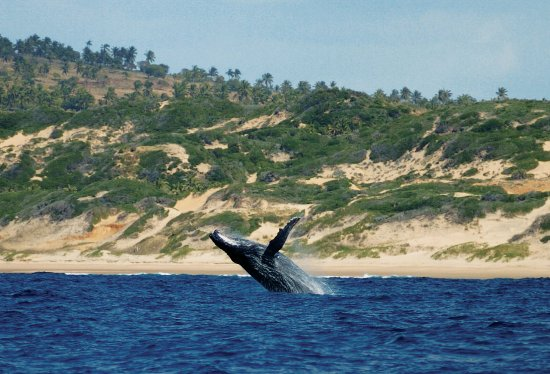 Almere, The Netherlands: Humpback whale in Mozambique