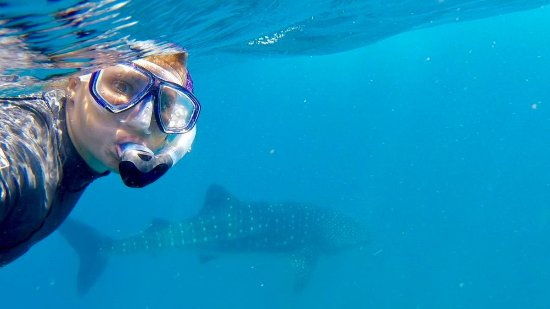 Almere, The Netherlands: Snorkelling with whalesharks in Mozambique
