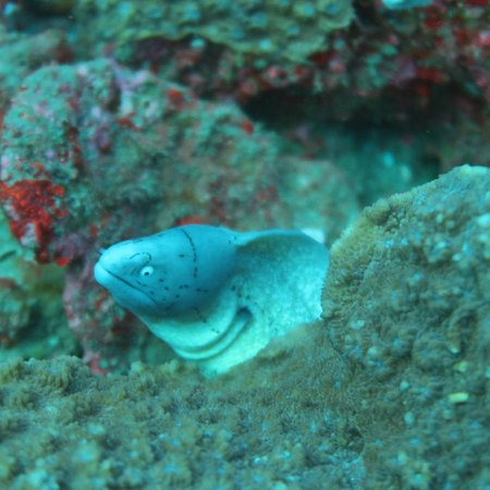 Almere, The Netherlands: Geometric eel spotted in Sodwana Bay, South Africa
