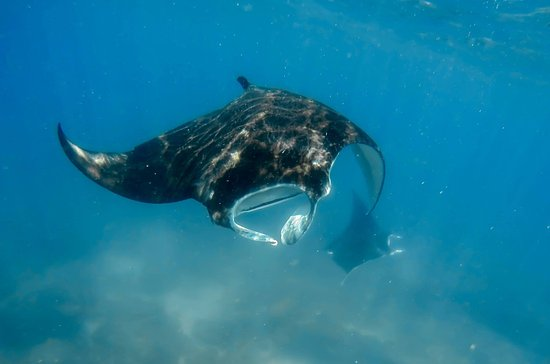 Almere, The Netherlands: Diving with giant mantas in Mozambique