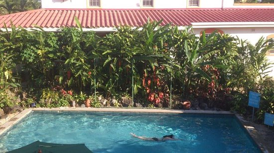 Belmopan, Μπελίζ: Relaxing by the pool, the grounds are full of beautiful exotic flowers and even more beautiful c