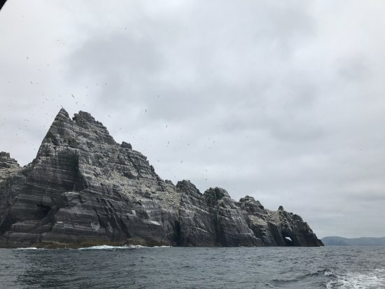 Portmagee, Ireland: Gannets on Skellig Beag