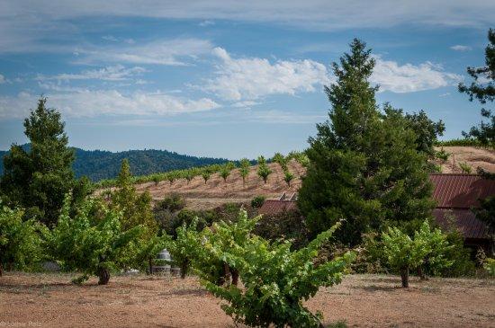 Cupertino, CA: The vinyards