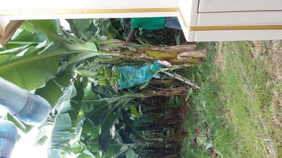 Le Lamentin, Martinik: 20170520_094950_large.jpg