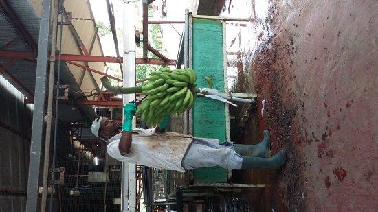 Le Lamentin, Martinik: 20170520_101439_large.jpg