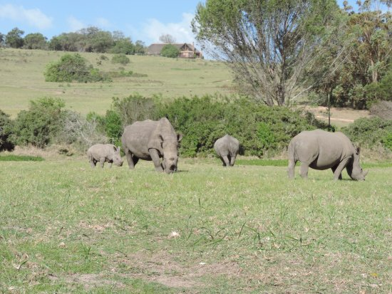 Port Elizabeth, Sudáfrica: one big happy family not many left due to poaching