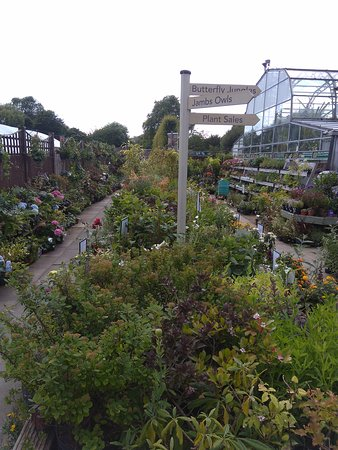Bexley, UK: Butterfly Jungles Experience & Plant Centre