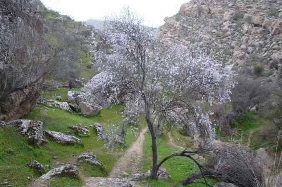 Fasa, Iran: Mian-Jangal (nature)